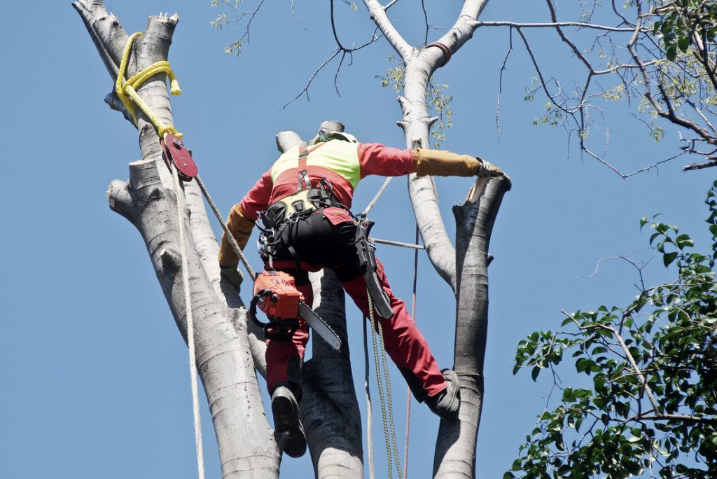 Tree services in Katy